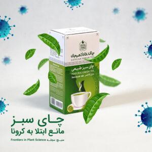 چای سبز؛ مانع ابتلا به کرونا
